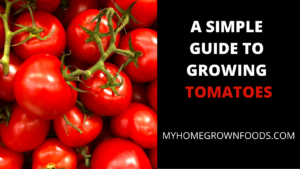 Growing Tomatoes At Home